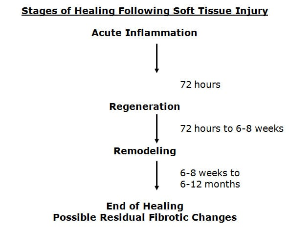 The Healing Of Injured Soft Tissues