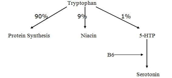 tryptophan converted to niacin