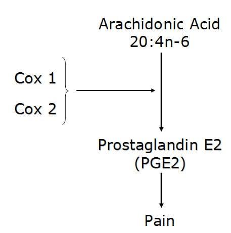 Cox enzymes convert the omega-6 fatty acid arachidonic acid into the pro-inflammatory pain producer prostaglandin E2 (PGE2).