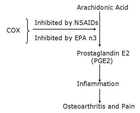 osteoarthritis process