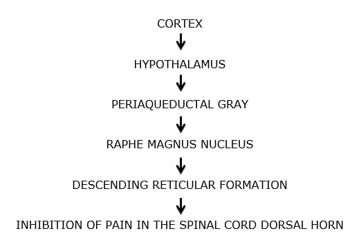 the importance of the opiate receptor and the periaqueductal gray matter in pain control