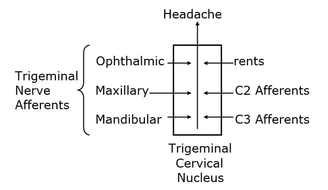 The brainstem and the upper spinal cord have a region of gray matter called the trigeminocervical nucleus. The nucleus is so named because its primary sensory inputs arise from the branches of the trigeminal nerve (cranial nerve V) and those of the upper cervical spine.