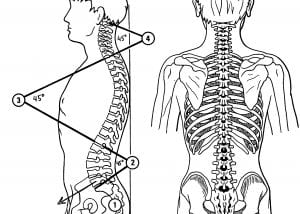 three curves of spine